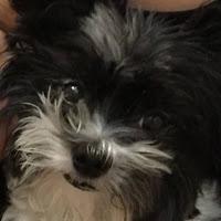 Santina Croniser's avatar