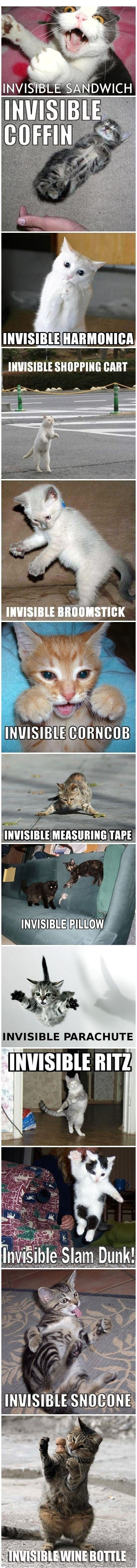 Invisible Kitty Stuffs