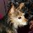 Aprilevette M avatar image