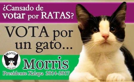 Morris-Vote-2.jpg