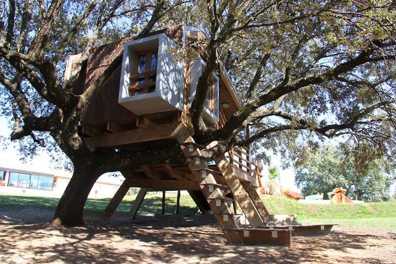 Casa en el árbol enraizada.