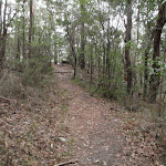Toomey walk (225724)