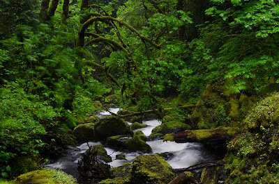 elowah cascade and mossy forest