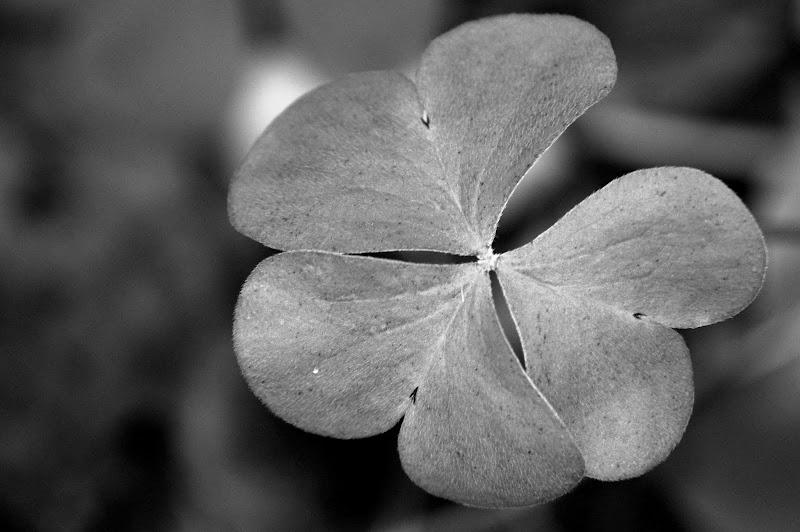 Tristeza, Folha de trevo em Preto e branco