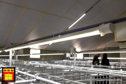 Open dag varkensbedrijf molenpas overloon 29-06-2013 (19).JPG