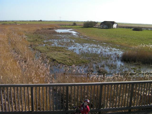 reclaimed land wildlife refuge reed beds portsmouth