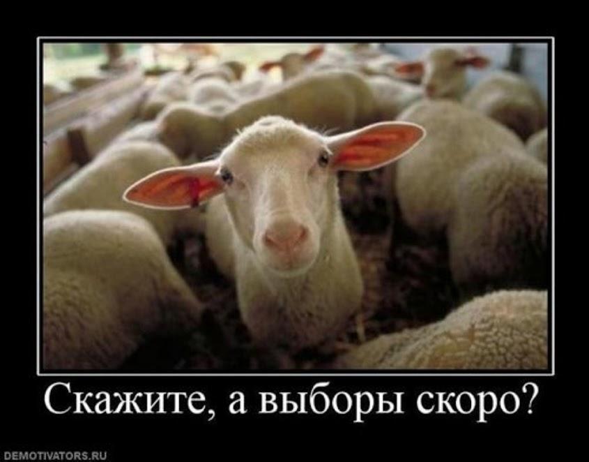 Беркутовцы грабят бойцов и волонтеров - Цензор.НЕТ 8210
