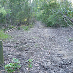 Traversing the ridge Olney State Forest (365180)