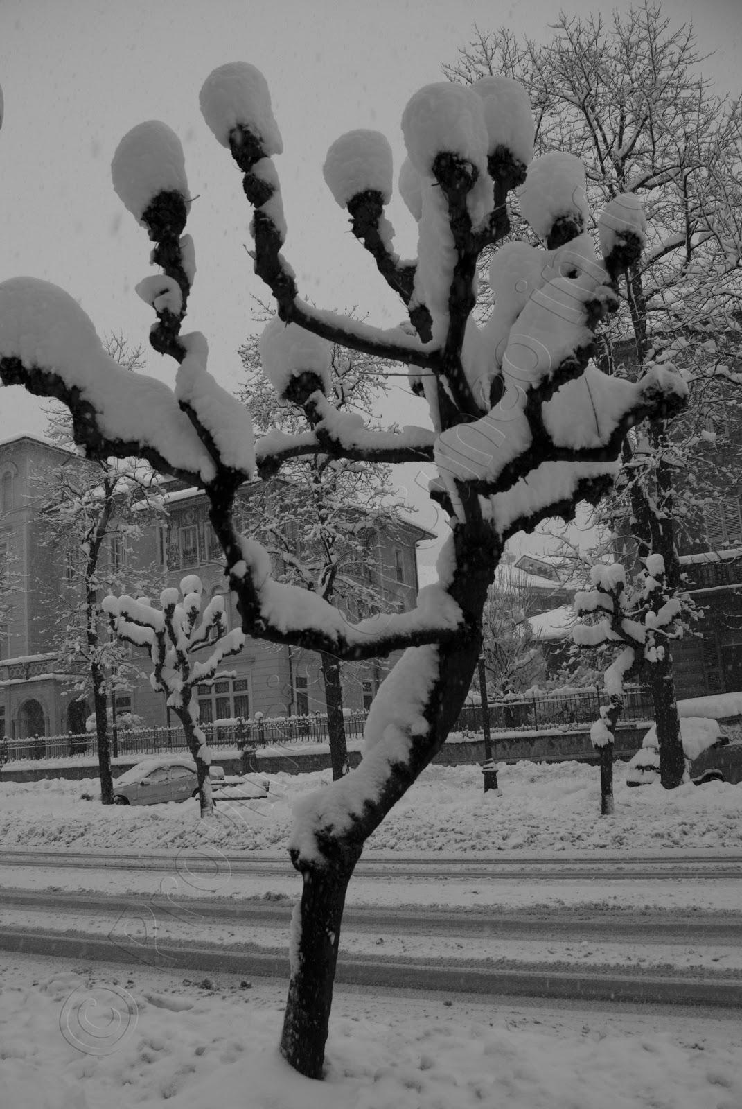 fotografia Neve Viale Angeli Cuneo
