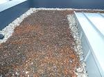 Wo ist denn hier die Dachbepflanzung?