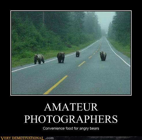 photo of some bears waling down a road apparently after a photographer