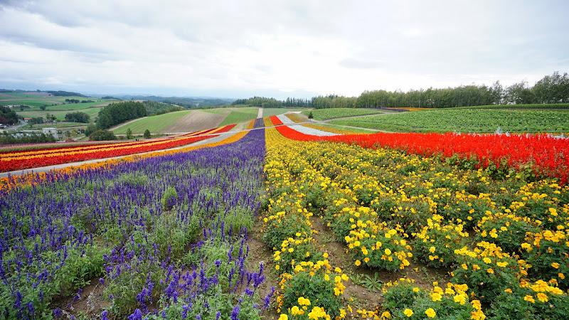 美瑛 四季彩の丘 写真4