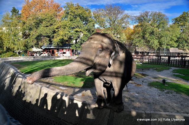 Слон, который кушает Smoki