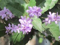 https://lh5.googleusercontent.com/-yxDbj2dZ7U8/T3Rgisv286I/AAAAAAAAALA/OecLJEf-9_4/s1600/ZZ+Unknown+002+Plant+-+Flower.jpg