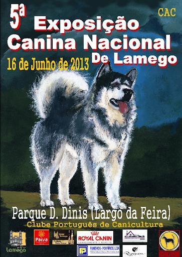 """Lamego elege o cão """"Campeão Nacional de Beleza"""""""