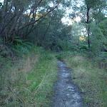 The trail near Daphne Pl (153115)