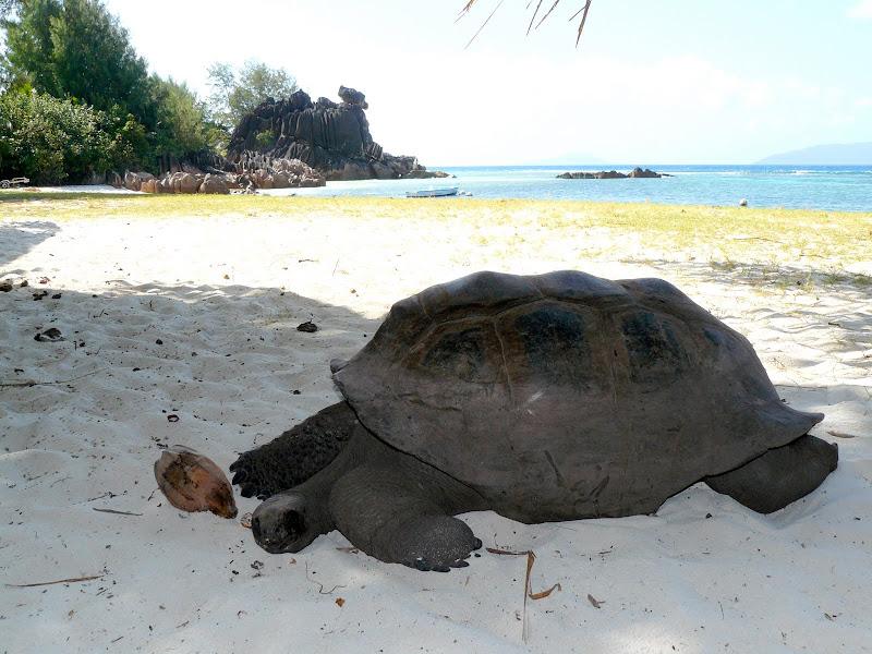 Riserva delle tartarughe (Curieuse Island)