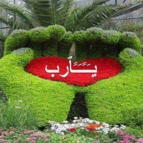 Safwan Ahmed Photo 24
