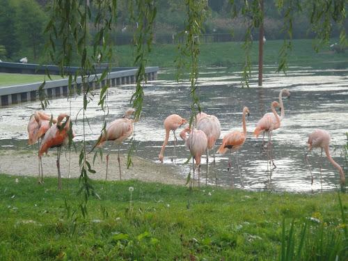 Uccelli al Kasteeltuinen di Arcen
