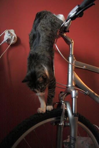 Kot i rower
