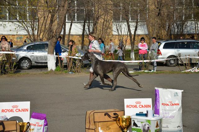 Кубок Аризоны-14(ПК)+ЧРКФ, Красноярск, 27 апреля 2014 DSC_6181