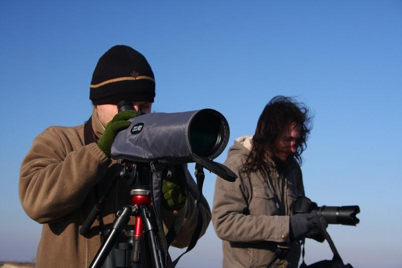 birdwatching pasari iarna Calarasi