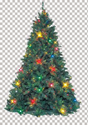 tree_lights_msr.jpg
