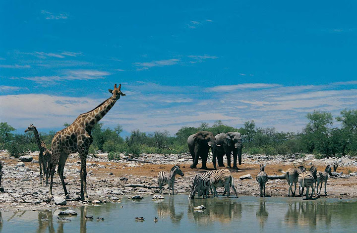 South Africa Wildlife Safari