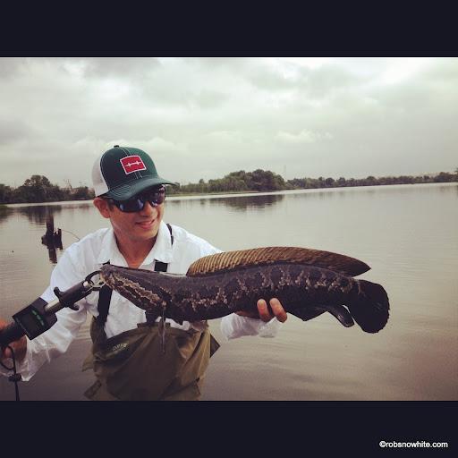 Brian Chou Tidal Potomac River Snakehead