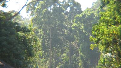Zoobic Safari Subic Bay Zambales [March 2009] 20