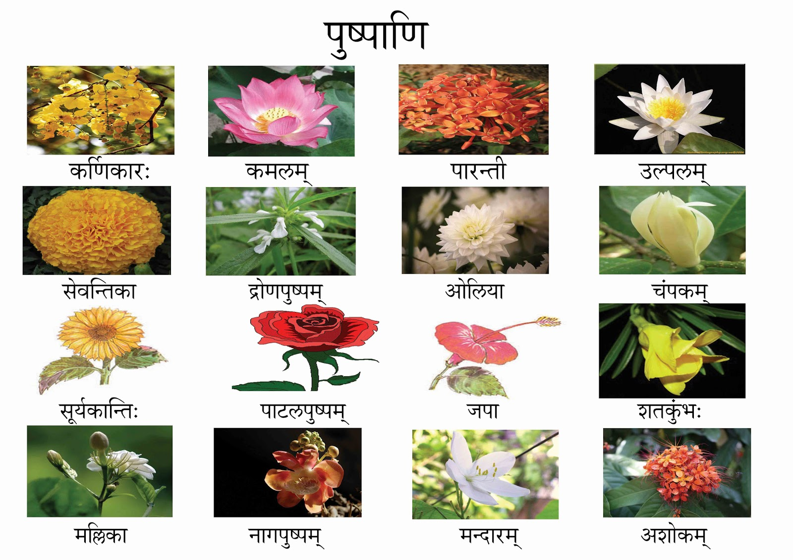 Flower images with names wallpapers background