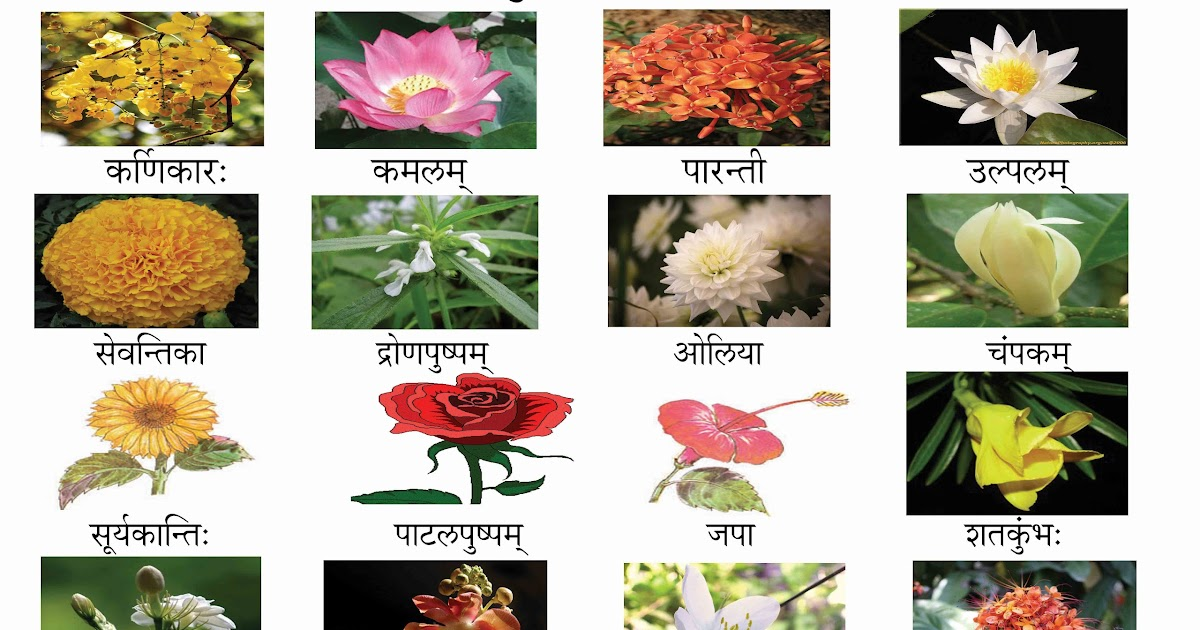 Diffe Types Of Indian Flowers With Pictures And Names 4k