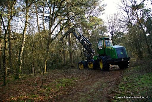 Houtoogst in de bossen van overloon 17-01-2012 (2).JPG