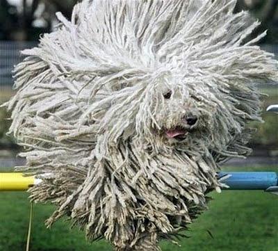 Сумасшедшие стрижки собак. 18 фото
