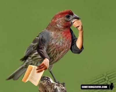 Lucu! Ini Jadinya Jika Burung Punya Tangan