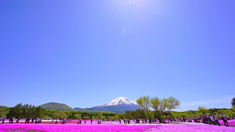 富士芝桜まつり 写真3