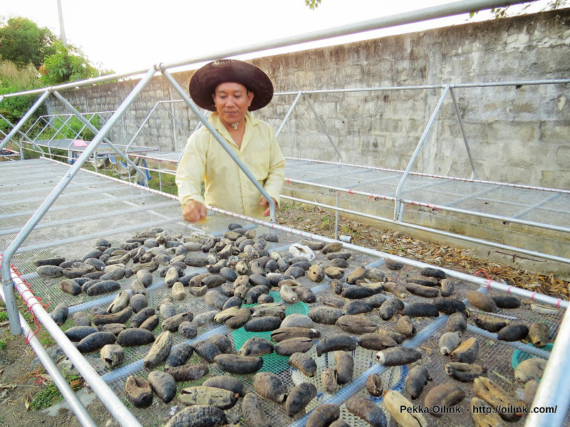 Man drying sea cucumbers at sea gypsy village, Koh sire, Phuket