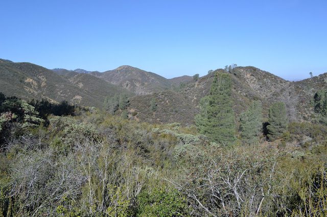 a few trees on sage green mountain sides