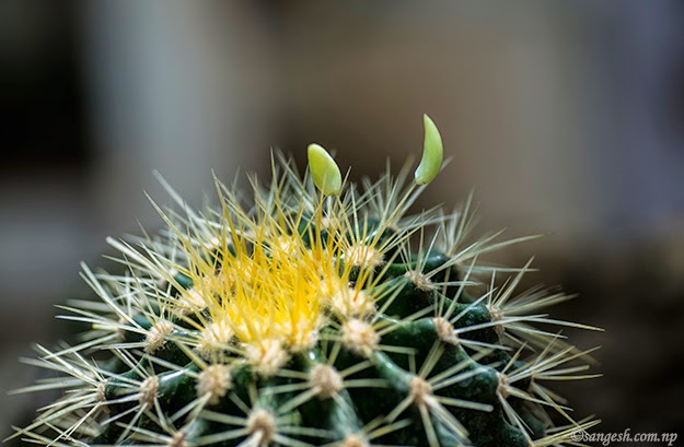 A cactus looks beautiful through macro lens