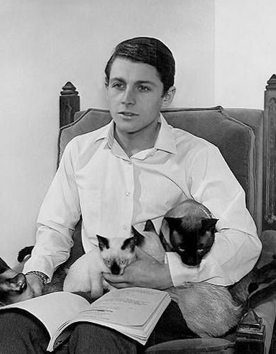 Burt Ward with three cats