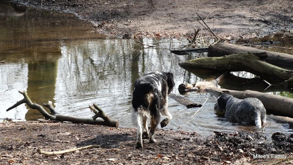 Balades canines en Nord (59)/Pas de Calais (62) - Boulogne-sur-Mer, Calais et Lille - Page 4 DSC01825