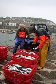 Landing mackerel