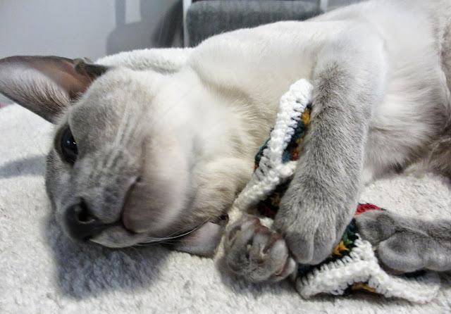 Jojo testaa palasten kiinnitystä - toistaiseksi on kissankestävä