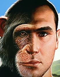Smarter Than an Ape ?