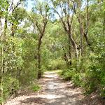 Walking along the wide trails near Koombalah Ave (393806)