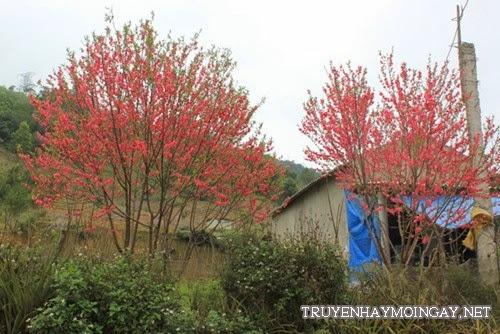 Mơ màng với cảnh đẹp trên cao nguyên Mộc Châu