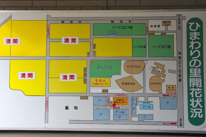 写真:ひまわりの里開花状況 8月10日(金)09:00