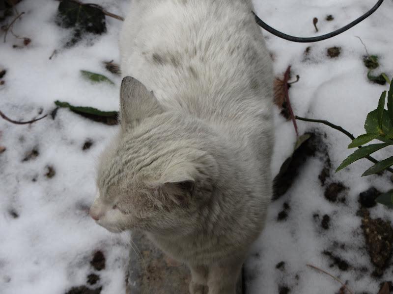 gato morsa teheran