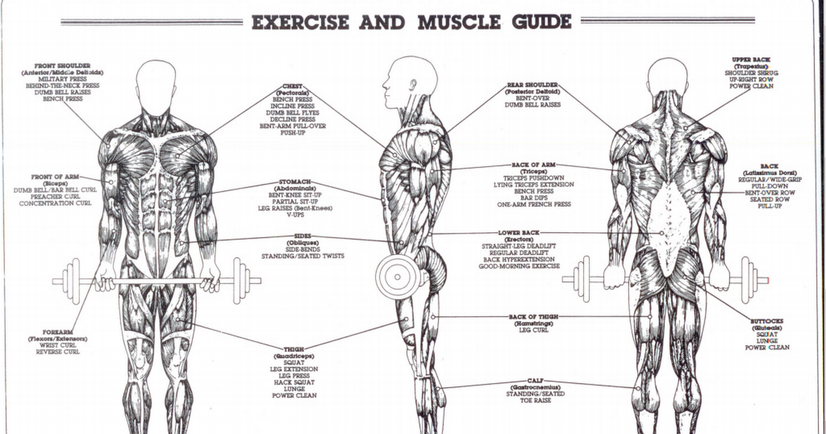 Exercise And Muscle Guide0001 1pdf Google Drive
