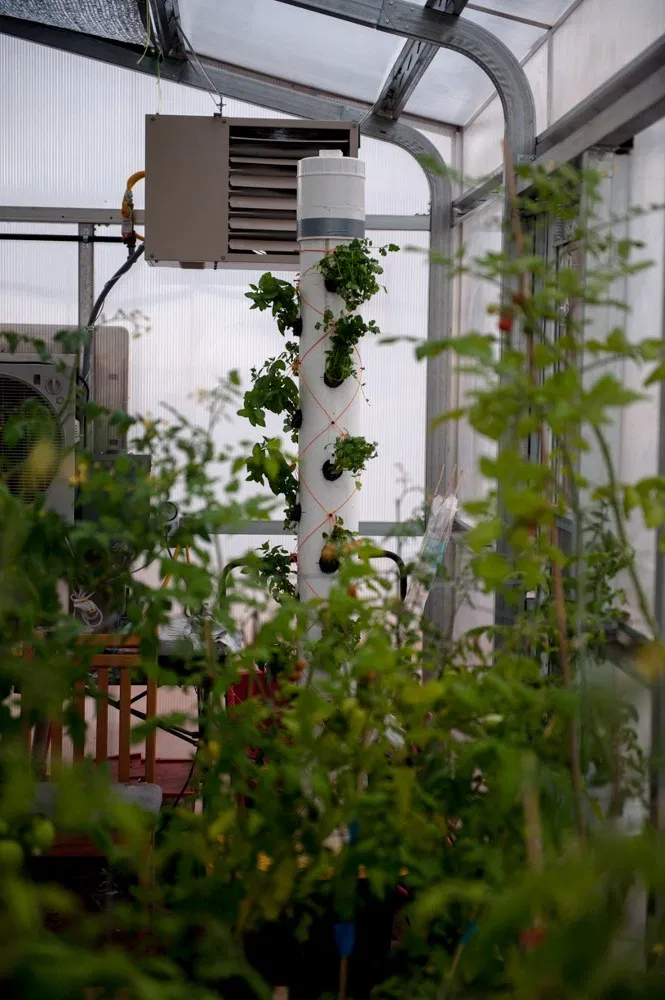 Aeroponics greenhouse